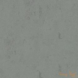 7150001 Lichen